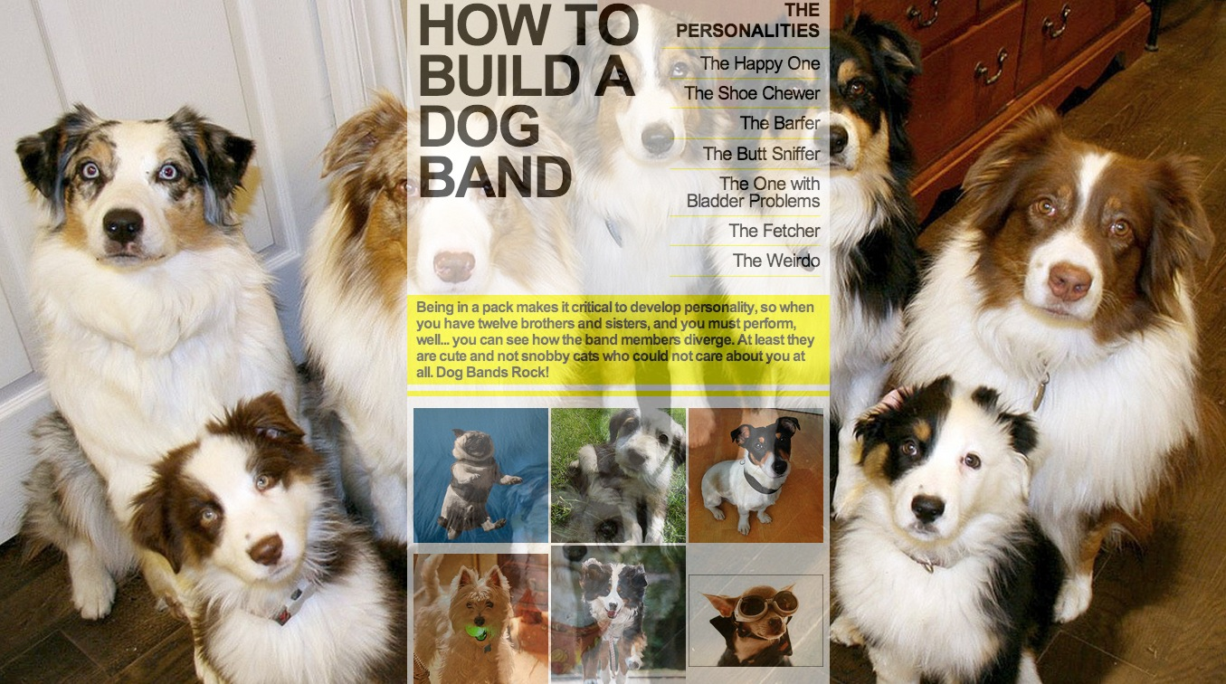 how to build a dog band